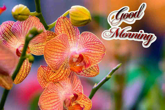 Beautiful good morning pictures with nature flowers