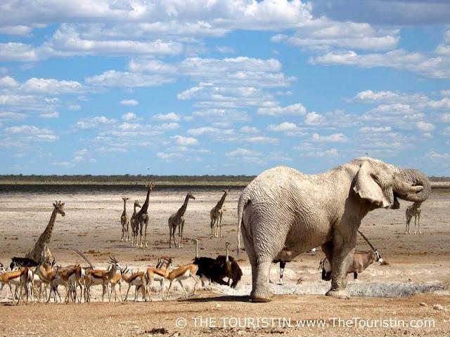 Wildlife Etosha Namibia - Dorothee Lefering - The Touristin