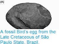 http://sciencythoughts.blogspot.co.uk/2014/12/a-fossil-birds-egg-from-late-cretaceous.html