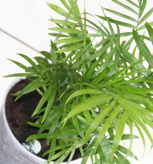 Best oxygen producing Indoor plants - Home decor ideas ...