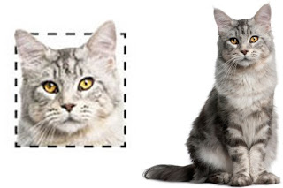 Do catlovers oftentimes pay attending to your seem upwards shape inward unlike types of cats Cats Face Shape Influence on its Character? | Anatomy of a Cat