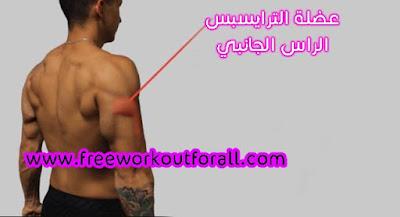 عضلة الراس الجانبي لترايسبس