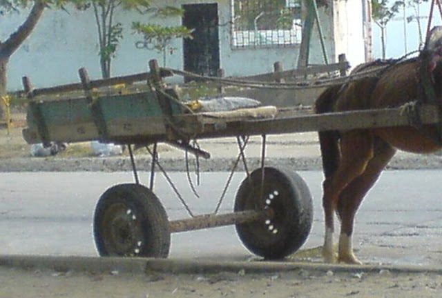 hoyennoticia.com, Pánico en la avenida Simón Bolívar de Valledupar causó caballo desbocado