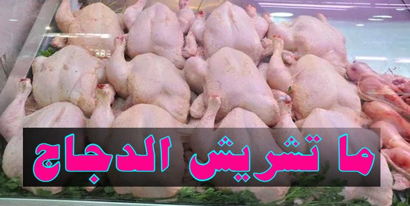 ما تشريش الدجاج+حملة في الجزائر لمقاطعة اللحوم البيضاء+أسعار اللحوم البيضاء+ارتفاع سعر الأعلاف+شهر رمضان+تربية الدجاج+أسباب ارتفاع أسعار الدجاج؟+Les raisons du prix élevé du poulet?+#حملة_مقاطعة + #الدجاج + #ما_تشريش_الدجاج + #الجزائر