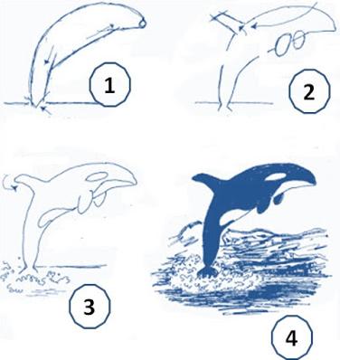 Cara Menggambar Hewan Laut Terlengkap Untuk Anak