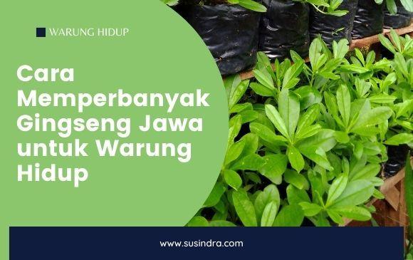 Cara Memperbanyak Gingseng Jawa untuk Warung Hidup - susindra