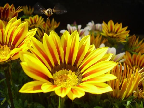 صور اغرب انواع الزهور واجملها