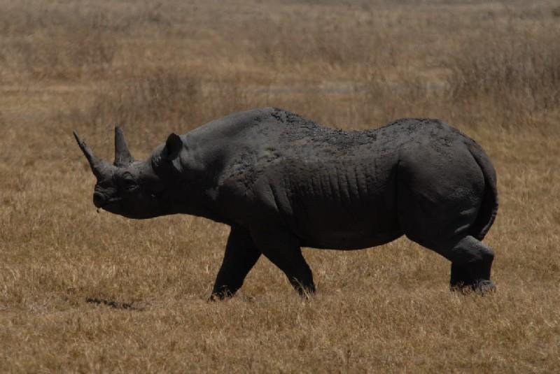 Algunos de los animales extintos en la ultima década ...