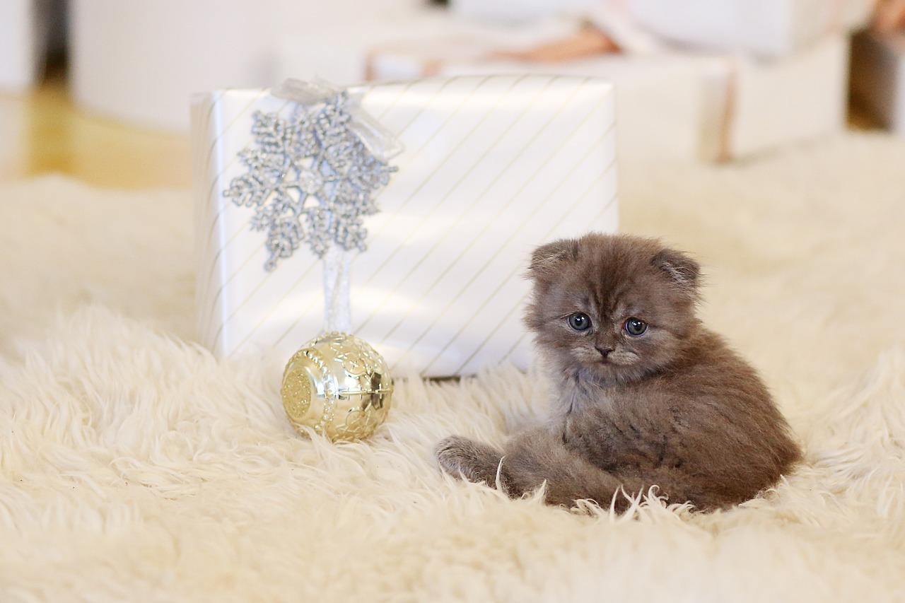 Comment présenter un nouveau chat à la maison?