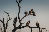 Vultures - Photo by Casey Allen on Unsplash