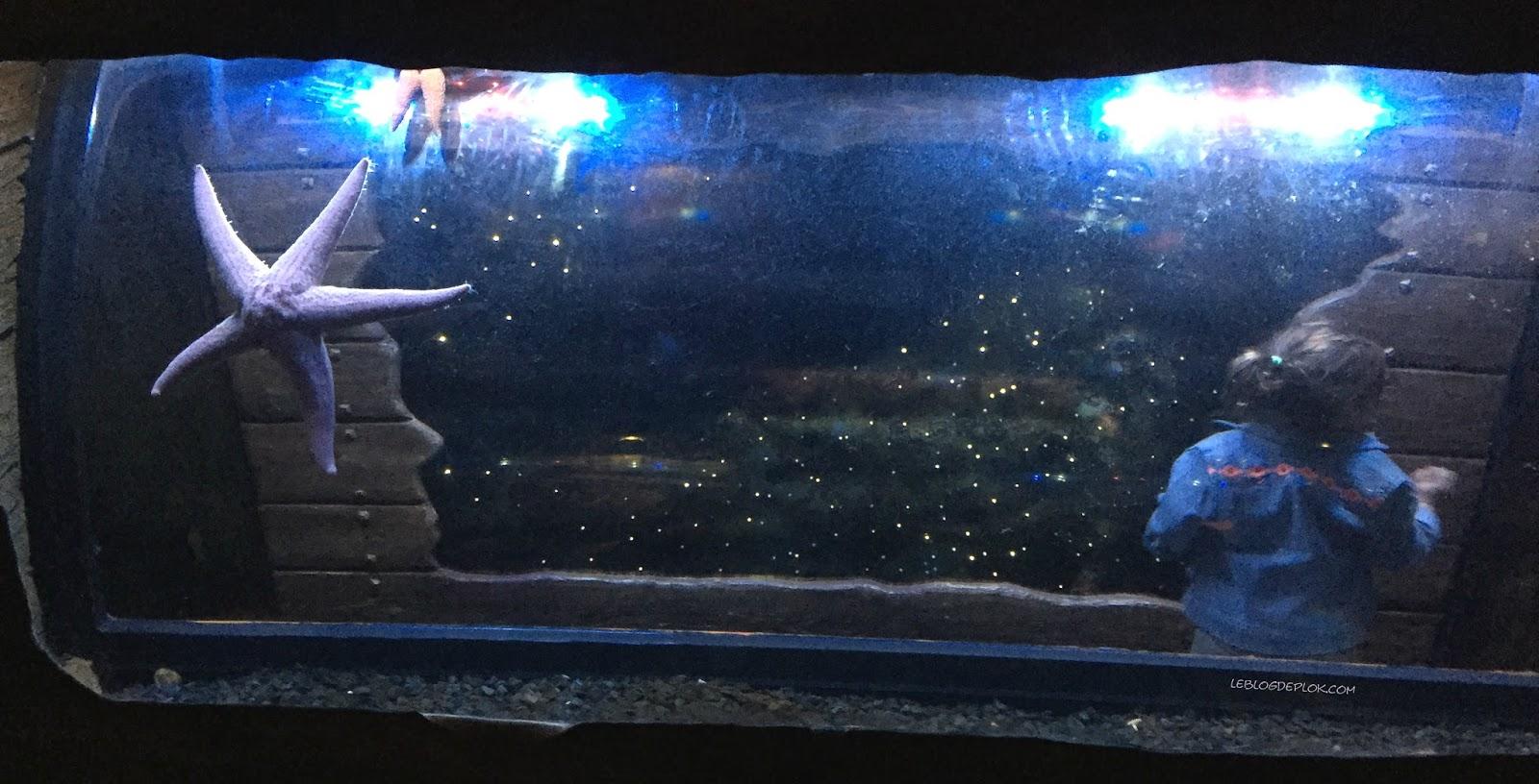 le blog de plok aquarium des stars l 39 affiche de l. Black Bedroom Furniture Sets. Home Design Ideas