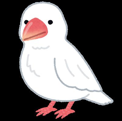 白い文鳥のイラスト