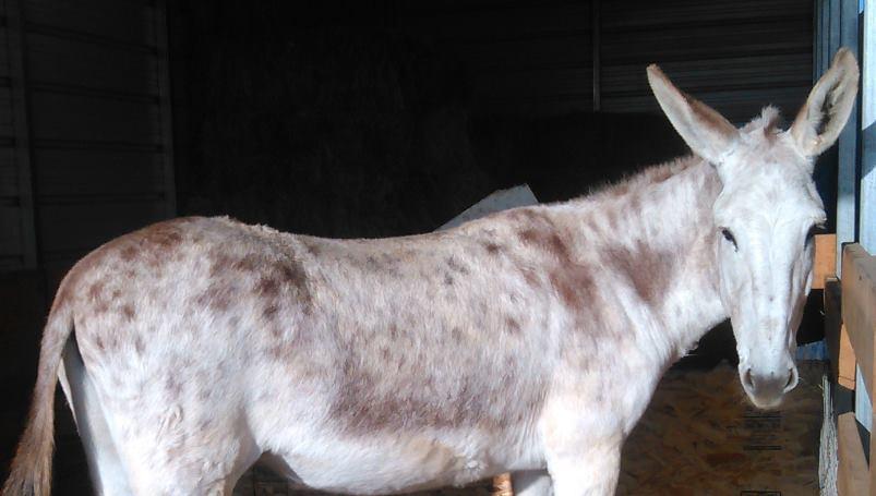 Foghorn Farm Donkey Training: The Cost of Owning Donkeys