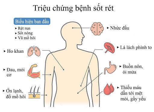 Sốt xuất huyết và sốt rét: Sự khác biệt là gì?