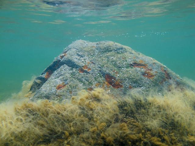 Kivi lähes veden pintaan asti