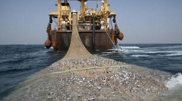 Le Maroc est le 17e producteur mondial de pêche selon la FAO.