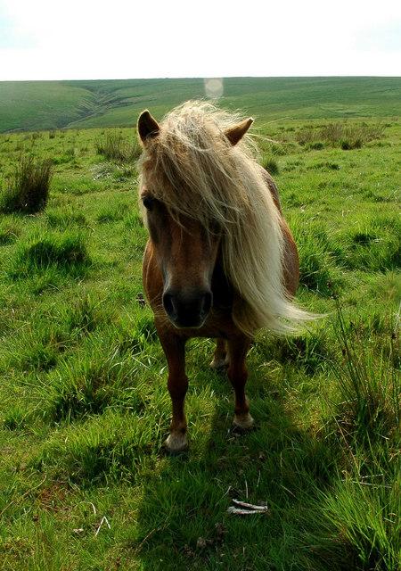 wat eten paarden wikipedia