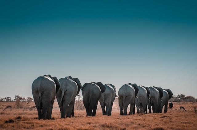 turismo animal ético