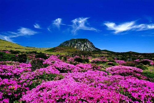 Where to go when traveling to Jeju Island?