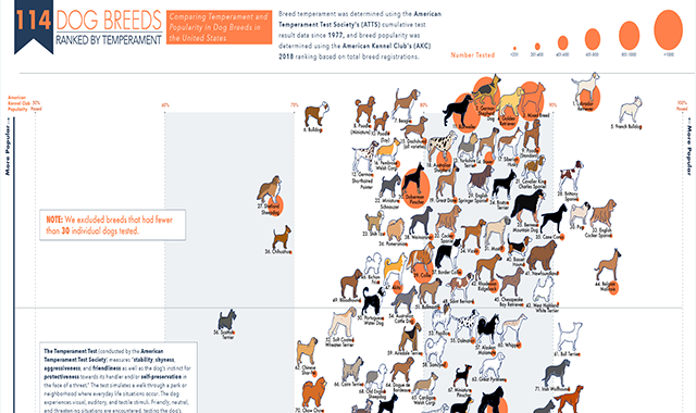 What Dog Breed Has the Best Temperament? #infographic