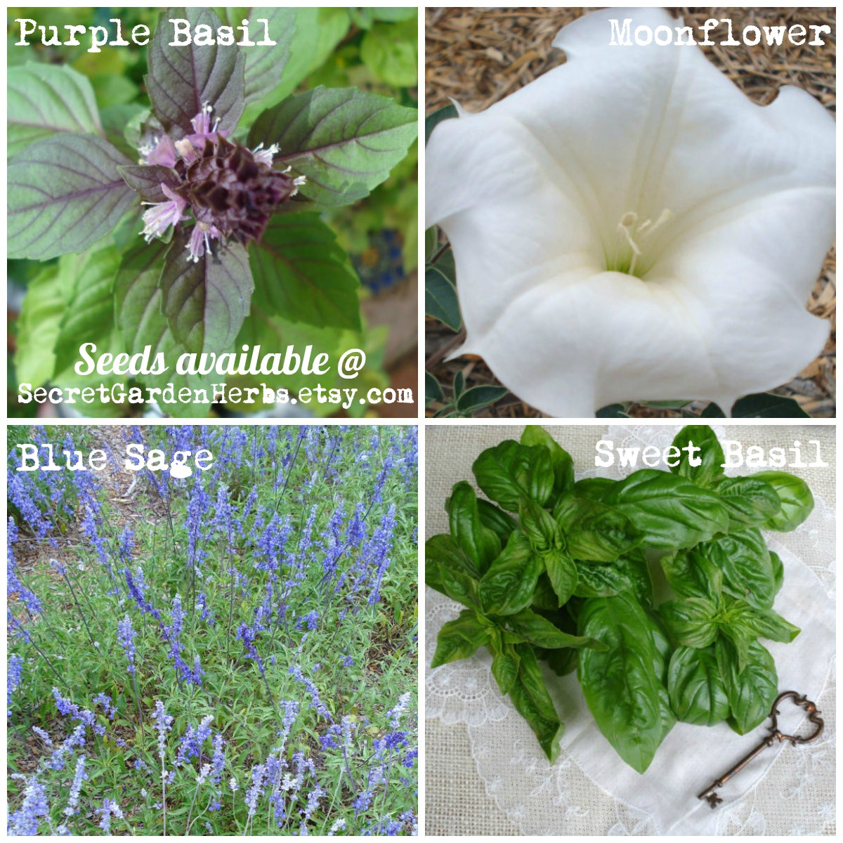 Secret Garden Herbs Etsy shop