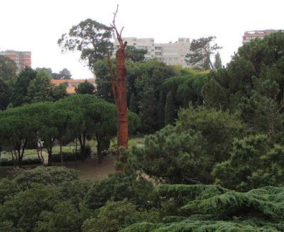 A obra de arte Pequi Vinagreiro vista entre as árvores do Parque de Serralves