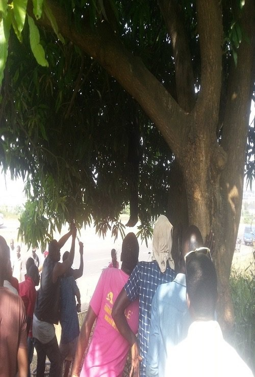SHOCKER: Man Hangs self On Mango Tree