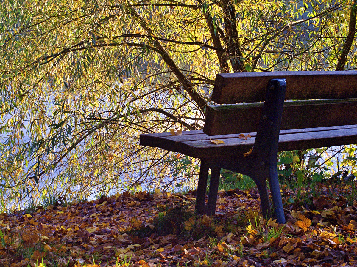 #297 Pentax 03 Toy Lens Telephoto f5.6 3.2mm – Herbstimpressionen am Aileswasensee (4)