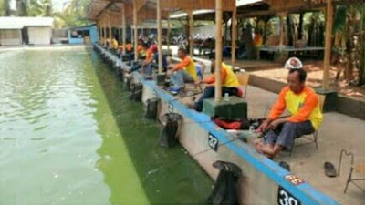 umpan ikan bawal air hijau