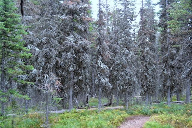 Національний Парк Глейшир. Регіон Ту Медісин, Монтана (Two Medicine, Glacier National Park, MT)