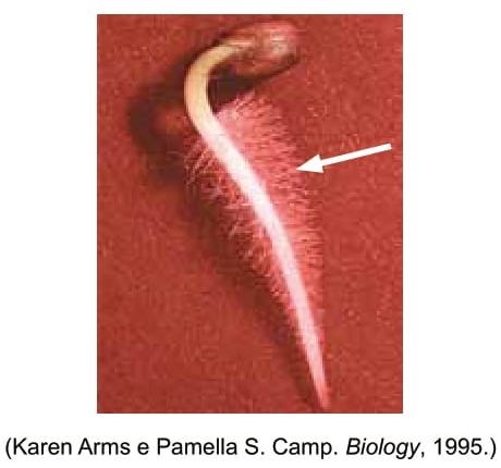 Karen Arms e Pamella S. Camp. Biology, 1995.
