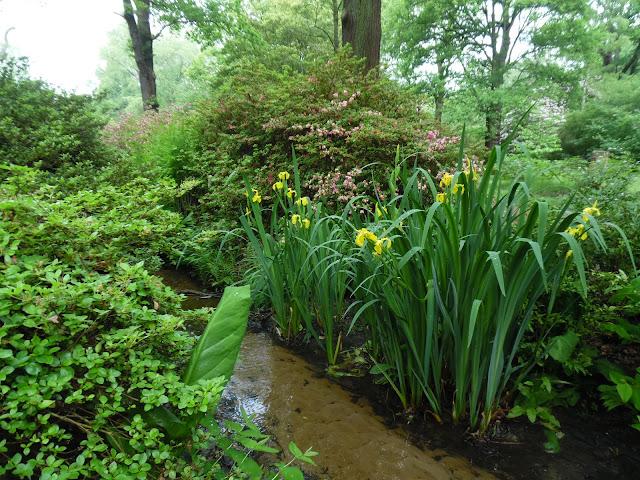 woodland garden, leśny ogród, strumień