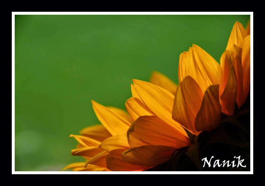 Nanikowy k cik recenzja archangel 39 s shadows nalini singh - Div style html code ...