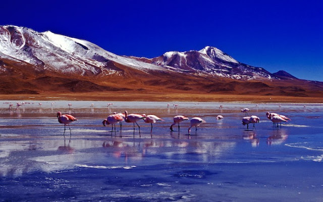 www.viajesyturismo.com.co 700 x 437