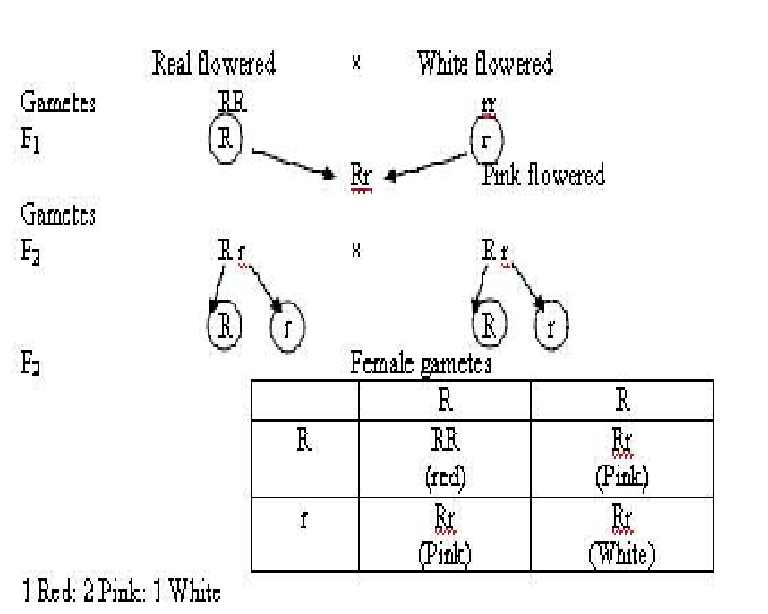 Standard Note  CODOMINANCE and INCOMPLETE DOMINANCE