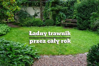 trawnik w małym ogrodzie