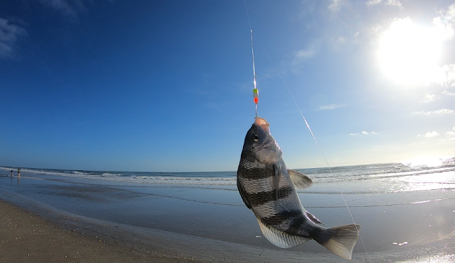 Florida, East Coast, Florida Surf Fishing, Surf Fishing, Florida Fishing, Fishing Reports, Fish Reports, Anglers, Fishing,