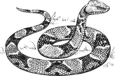 Snake or serpent