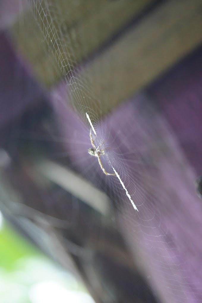 Laba-laba dan rumahnya