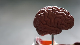 How to use the power of the brain