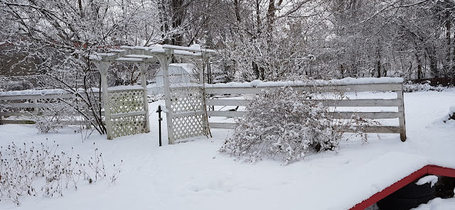 Image: My Backyard, by Catherine Watt