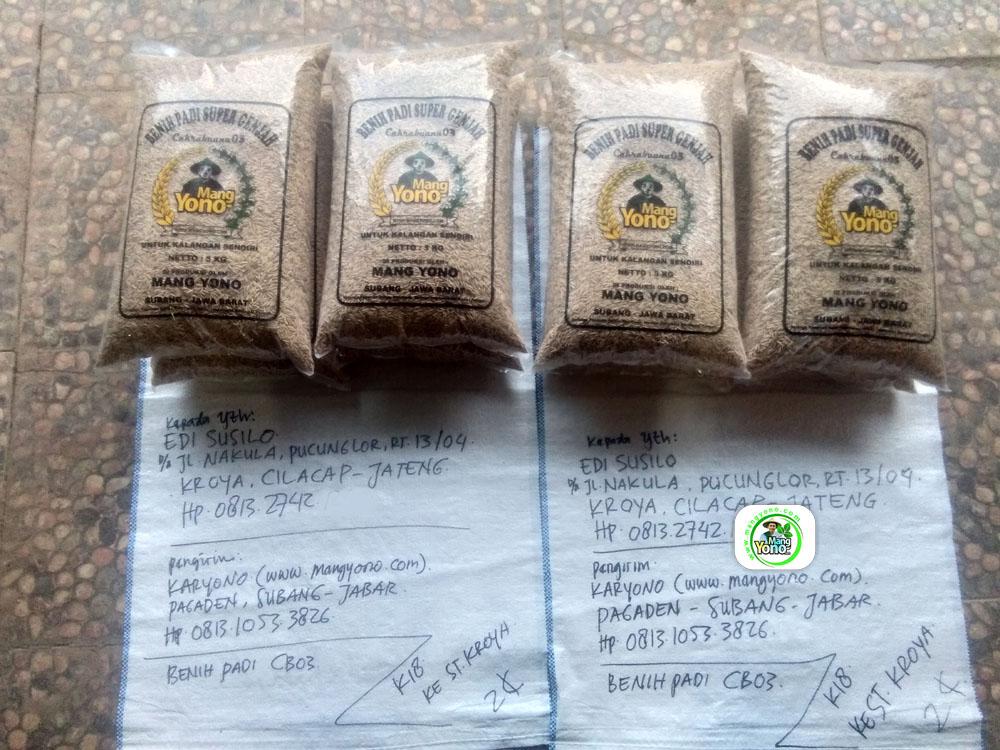 Benih Padi yang dibeli EDI SUSILO Cilacap, Jateng.  (Sebelum packing karung).