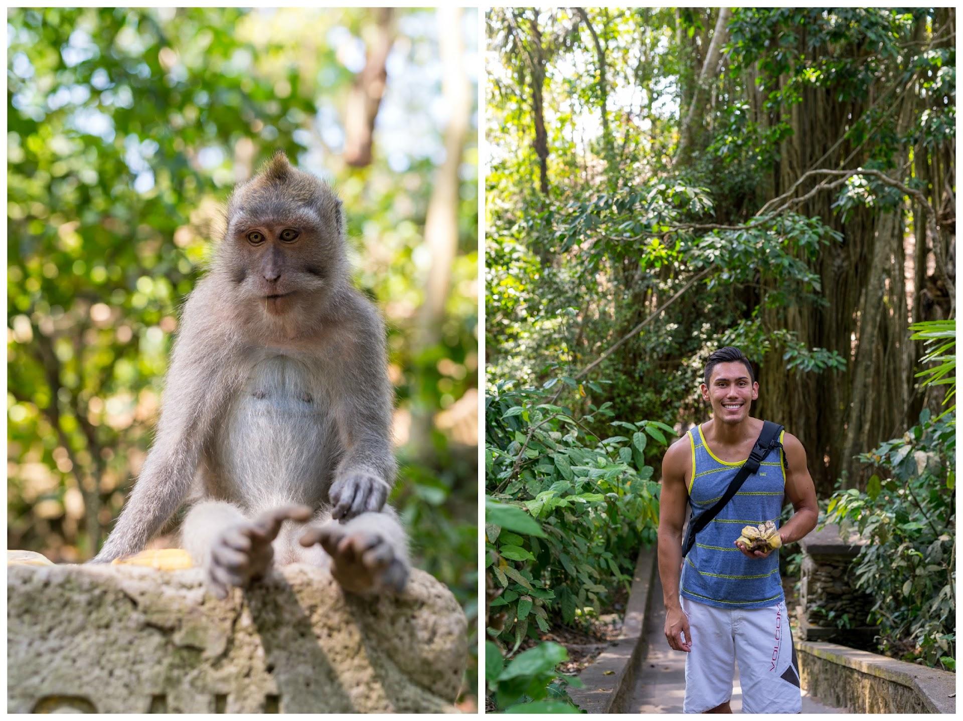 jungle, travel blog, bali ubud, monkey sanctuary, nature landscape photography, photographer california san francisco bay area, travel blogger, southeast asia, couple bloggers, asian, monkey photography, animals
