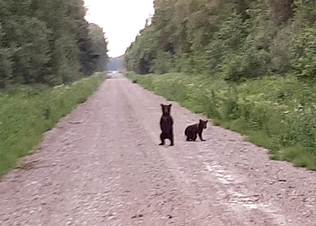 Lāči Latvijā 1
