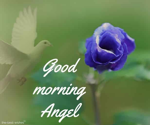 good morning angel with blue rose