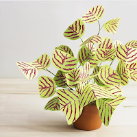 A plant with pale green leaves striped in a burgundy color. BUTTERFLY PLANT (Christia obcordata)