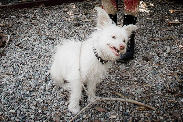 Jean Greige By Madeline Pendleton 249 Seizure Dog Gif