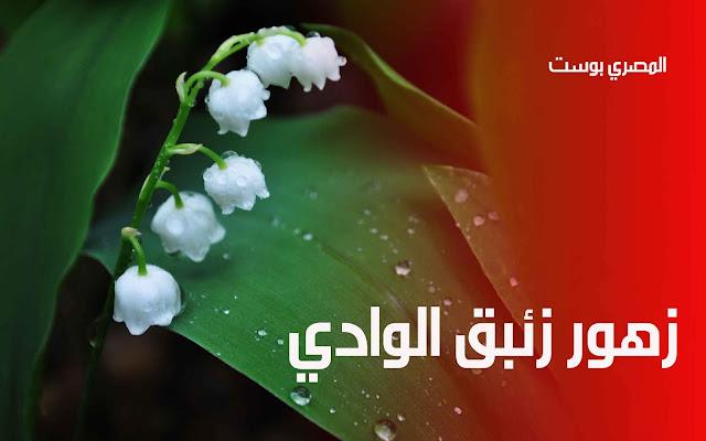 زهور زئبق الوادي - صور ورد - صور زهور