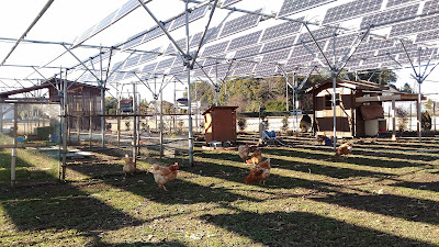 Solar sharing definition: Ground floor - chickens; First floor: solar panels.