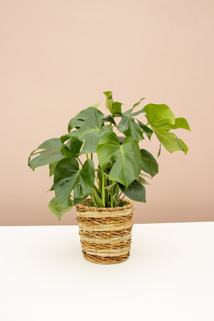 Example plant from online plant shop Lively Root